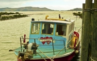 Coromandel;sandy_beaches;bachs;holiday_homes;blue_sky;blue_sea;bush;native_forre