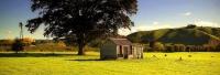 Wakefield;Tasman_Bay;Sheep_Shed;Paddock;wind_pump