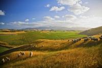 Awatere_Valley;Marlborough;bush;native_forrest;irrigation;green_fields;green_pad