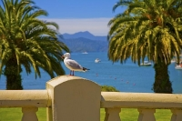 Picton;Marlborough_Sounds;Marlborough;bush;native_forrest;hills;mountains;Seagul