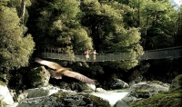 swing_bridge;Hollyford_Track;bush;Hollyford_river;trampers;boulders;rocks;kea;ke
