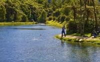 Takaka;Golden_Bay;Anatoki_Salmon_Farm;hills;rivers;Road;bush;native_forrest;gree