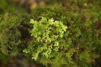 Bush;Buller_Region;lichen;moss
