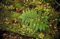 Bush;Buller_Region;lichen;moss;Fern