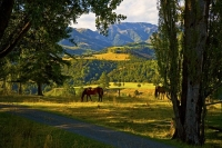 Horses_at_Sherwood;Hanmer_Springs;green_fields;paddocks;brown_hills;hills;mounta