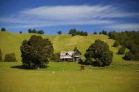 Wakefield;Tasman_Bay;Dilapidated_farm_house;Sheep_Shed;sheep_paddock